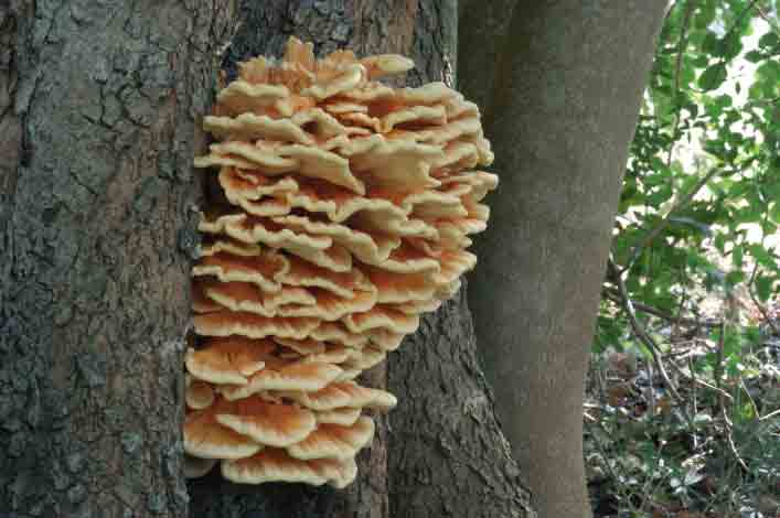 Se le unghie da un fungo anneriscono